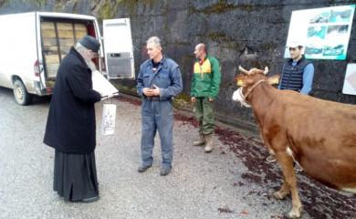 Milanova plemenitost ruši sve granice- poklonio kravu manastiru Zagrađe
