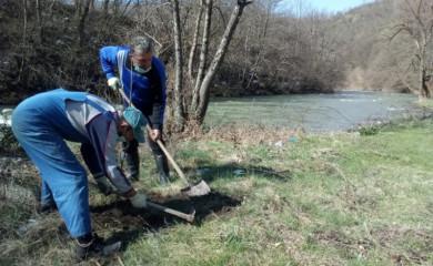 Sadnjom jasena, počela velika akcija uređenja obala i zelenih površina