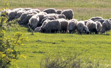 Osumnjičen za zagađivanje stočne hrane